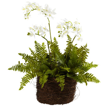 Mini Phalaenopsis Fern w/Bridsnest Planter - SKU #4834