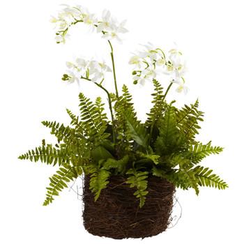 Mini Phalaenopsis Fern w/Bridsnest Planter - SKU #4834