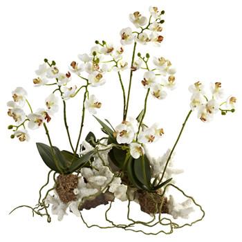 Mini Phalaenopsis Set on Coral - SKU #4836