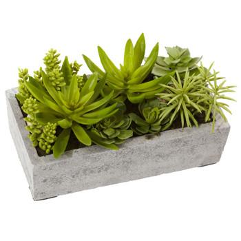 Succulent Garden w/Concrete Planter - SKU #4841