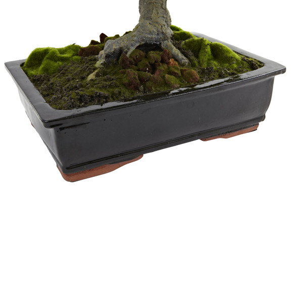 Giant Podocarpus w/Mossed Bonsai Planter - SKU #4849 - 1