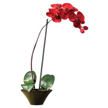 Holiday Phalaenopsis Orchid Arrangement - SKU #4859