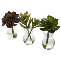 5.5 Succulent Arrangements Set of 3 - SKU #4954-S3