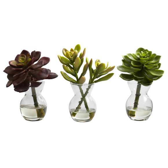 Succulent Arrangements Set of 3 - SKU #4954-S3 - 1