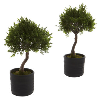 Cedar Bonsai w/Planter Set of 2 - SKU #4965-S2