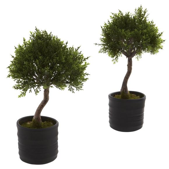 Cedar Bonsai w/Planter Set of 2 - SKU #4965-S2