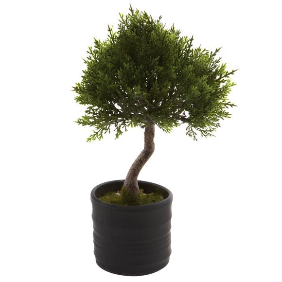 Cedar Bonsai w/Planter Set of 2 - SKU #4965-S2 - 1