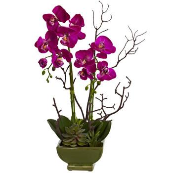 Orchid Succulent Arrangement - SKU #4990