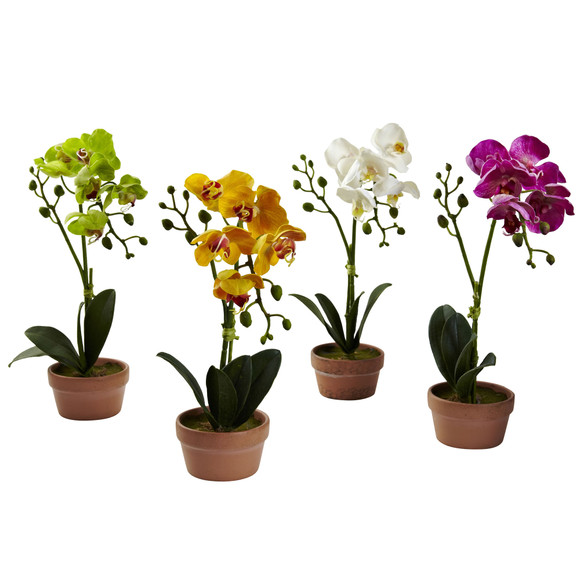 Phalaenopsis Orchid w/Clay Vase Set of 4 - SKU #4991-S4