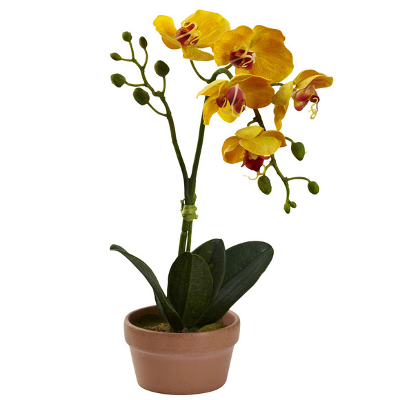 Phalaenopsis Orchid w/Clay Vase Set of 4 - SKU #4991-S4 - 1