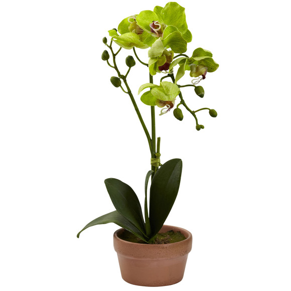 Phalaenopsis Orchid w/Clay Vase Set of 4 - SKU #4991-S4 - 2