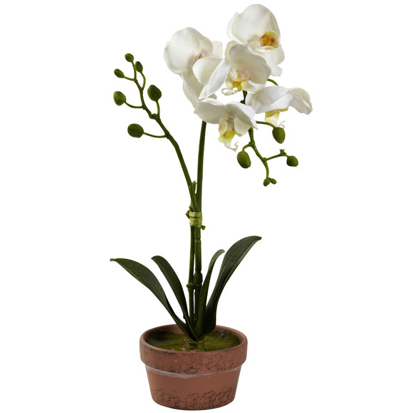 Phalaenopsis Orchid w/Clay Vase Set of 4 - SKU #4991-S4 - 4
