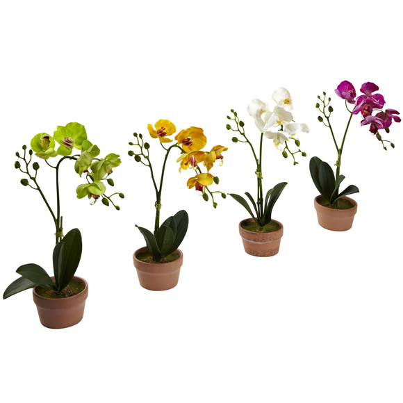 Phalaenopsis Orchid w/Clay Vase Set of 4 - SKU #4991-S4 - 5