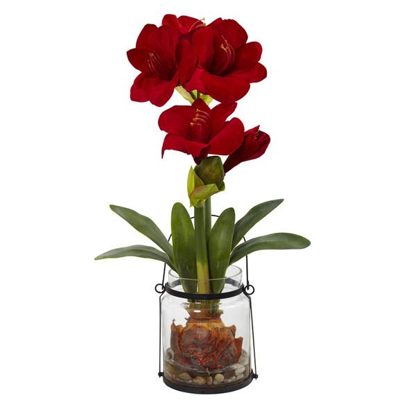 24 Amaryllis w/Vase - SKU #4994