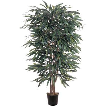 5 Weeping Ficus Silk Tree - SKU #5018