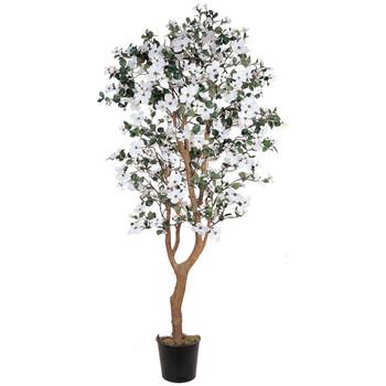 5 Dogwood Silk Tree - SKU #5019