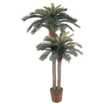 6 4 Sago Palm Double Potted Silk Tree - SKU #5033