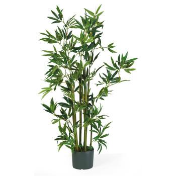 4 Bamboo Silk Plant - SKU #5040