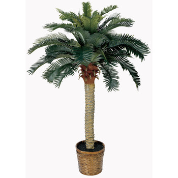 4 Sago Silk Palm Tree - SKU #5043