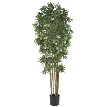 6 Bamboo Japanica Silk Tree - SKU #5045-NT