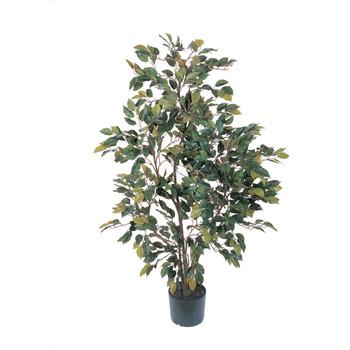 4 Ficus Silk Tree - SKU #5074