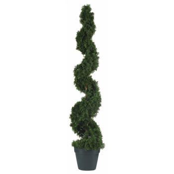 4 Cedar Spiral Silk Tree In-door/Out-door - SKU #5076