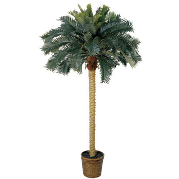 6 Sago Palm Silk Tree - SKU #5107