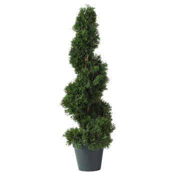 2 Cedar Spiral Silk Tree In-door/Out-door - SKU #5160