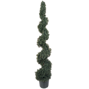 5 Cedar Spiral Silk Tree In-door/Out-door - SKU #5166