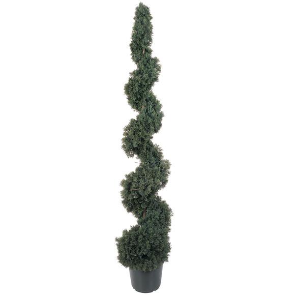 5 Cedar Spiral Silk Tree In-door/Out-door - SKU #5166