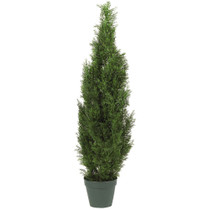 4 Cedar Tree w/1000 Lvs - SKU #5172