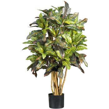 3 Croton Silk Tree - SKU #5182