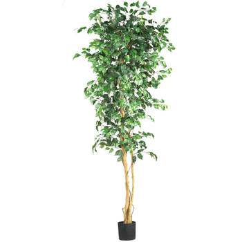 7 Ficus Silk Tree - SKU #5210