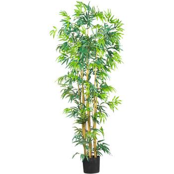 6 Multi Bambusa Bamboo Silk Tree - SKU #5214