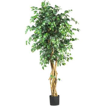 6 Palace Style Ficus Silk Tree - SKU #5216