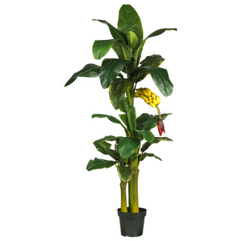 6 Triple Stalk Banana Silk Tree - SKU #5226
