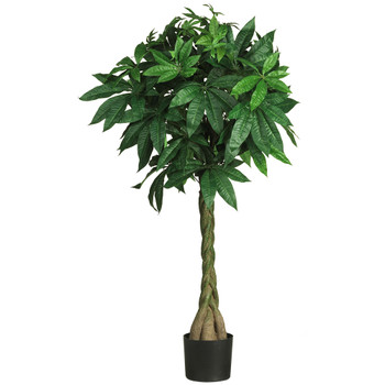 51 Money Silk Tree - SKU #5249
