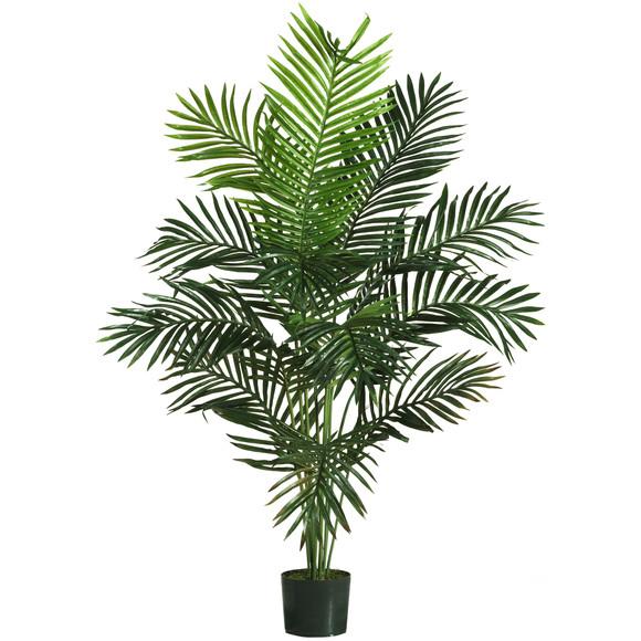 5 Paradise Palm - SKU #5259