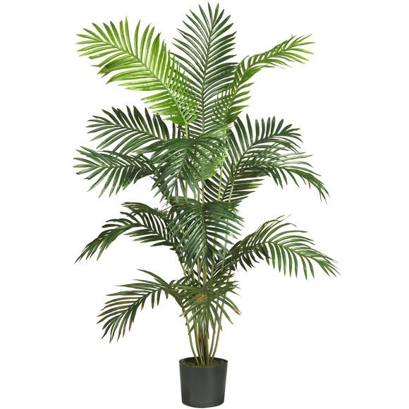 6 Paradise Palm - SKU #5260