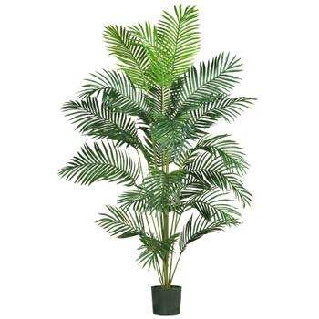 7 Paradise Palm - SKU #5261