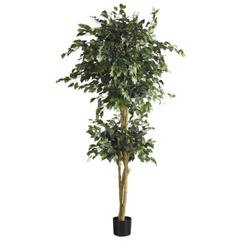 6 Double Ball Ficus Silk Tree - SKU #5268
