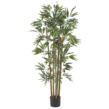 4 Multi Bambusa Bamboo Silk Tree - SKU #5280