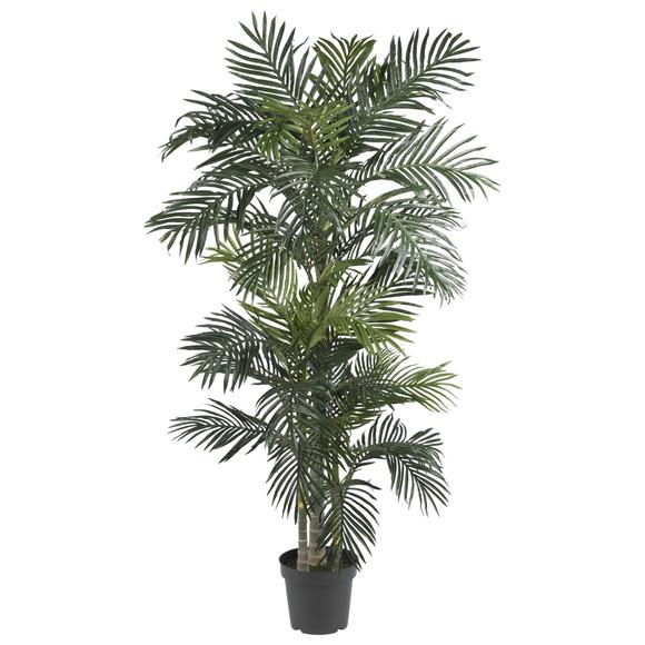 6.5 Golden Cane Palm Silk Tree - SKU #5289