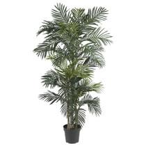 6.5 Golden Cane Palm Tree w/333 Lvs - SKU #5289