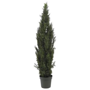 6 Mini Cedar Pine Tree Indoor/Outdoor - SKU #5292
