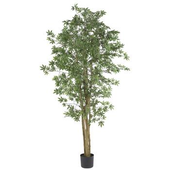 6 Japanese Maple Silk Tree - SKU #5297