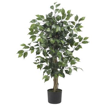 3 Ficus Silk Tree - SKU #5298
