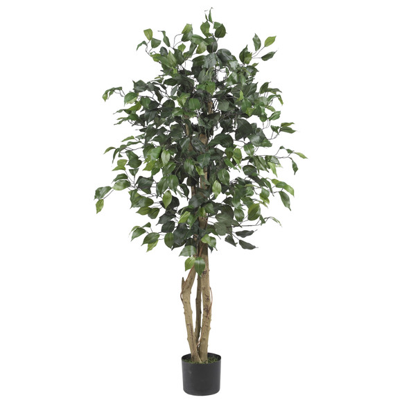 4 Ficus Silk Tree - SKU #5299