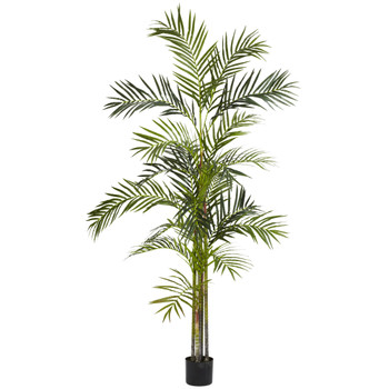6 Areca Palm Silk Tree - SKU #5316
