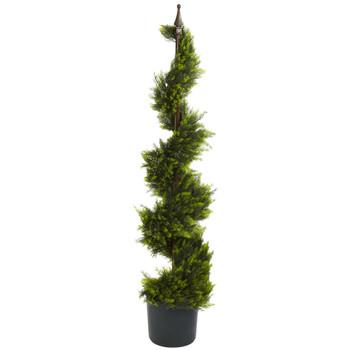 4 Cypress Spirial Silk Tree - SKU #5324